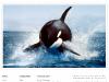 photographer-web-design